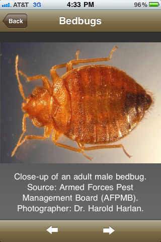 Bedbugs 'n Things