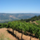 Wine Trip