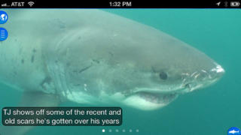 Shark Net – Predators of the Blue Serengeti review